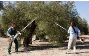Maquinaría para el olivar